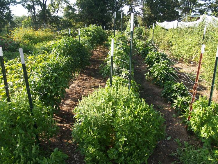 Downstream Farm Organic Produce