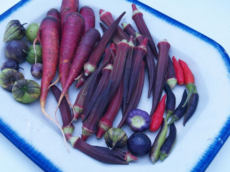 Our Purple Crops